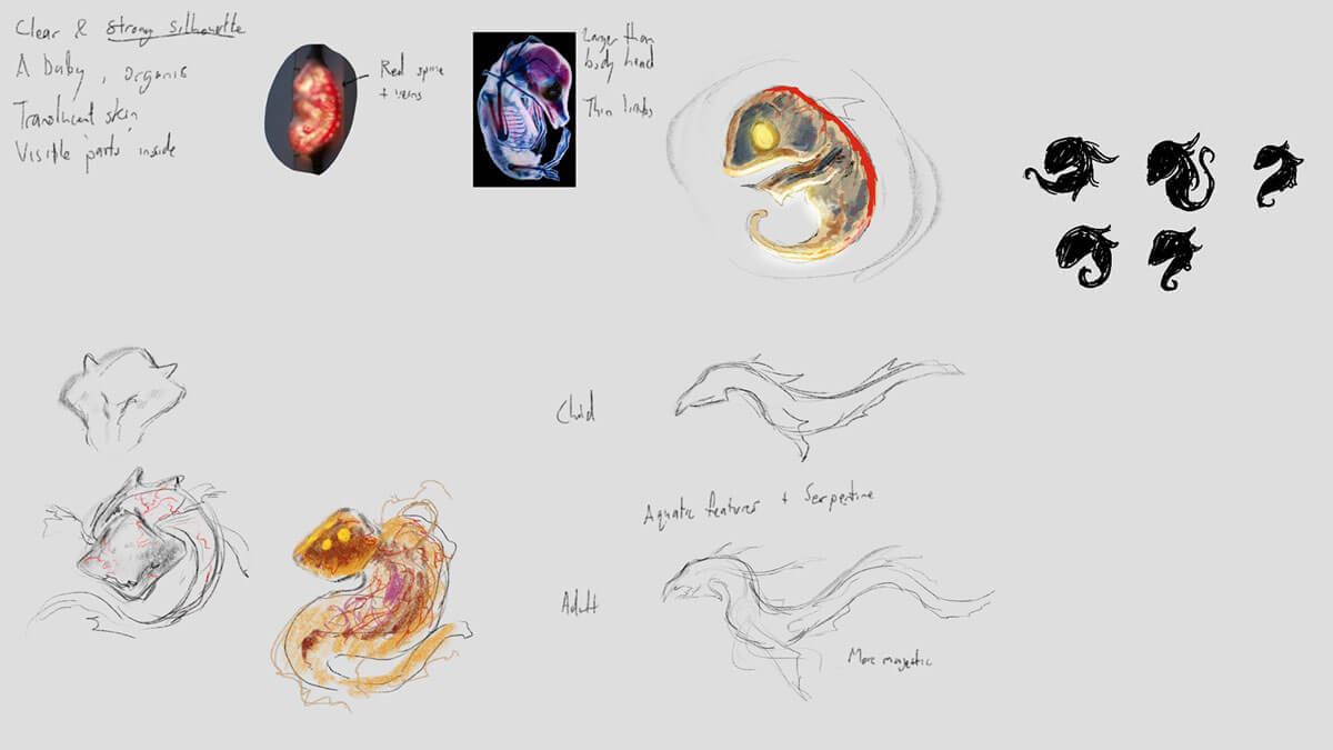 Concept sketches of an embryo for an alien creature