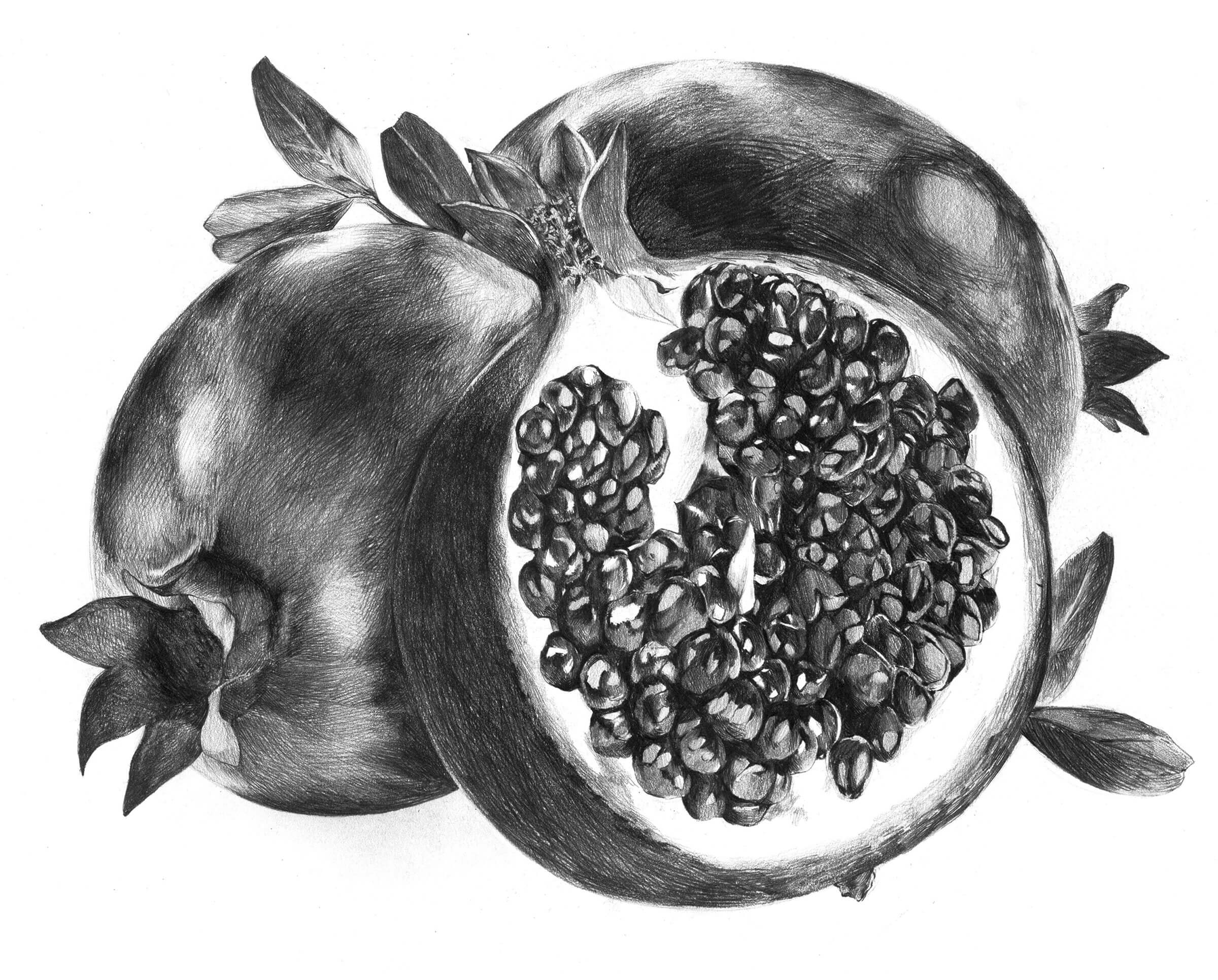 Black-and-white sketch of pomegranates, one of which is sliced in half.