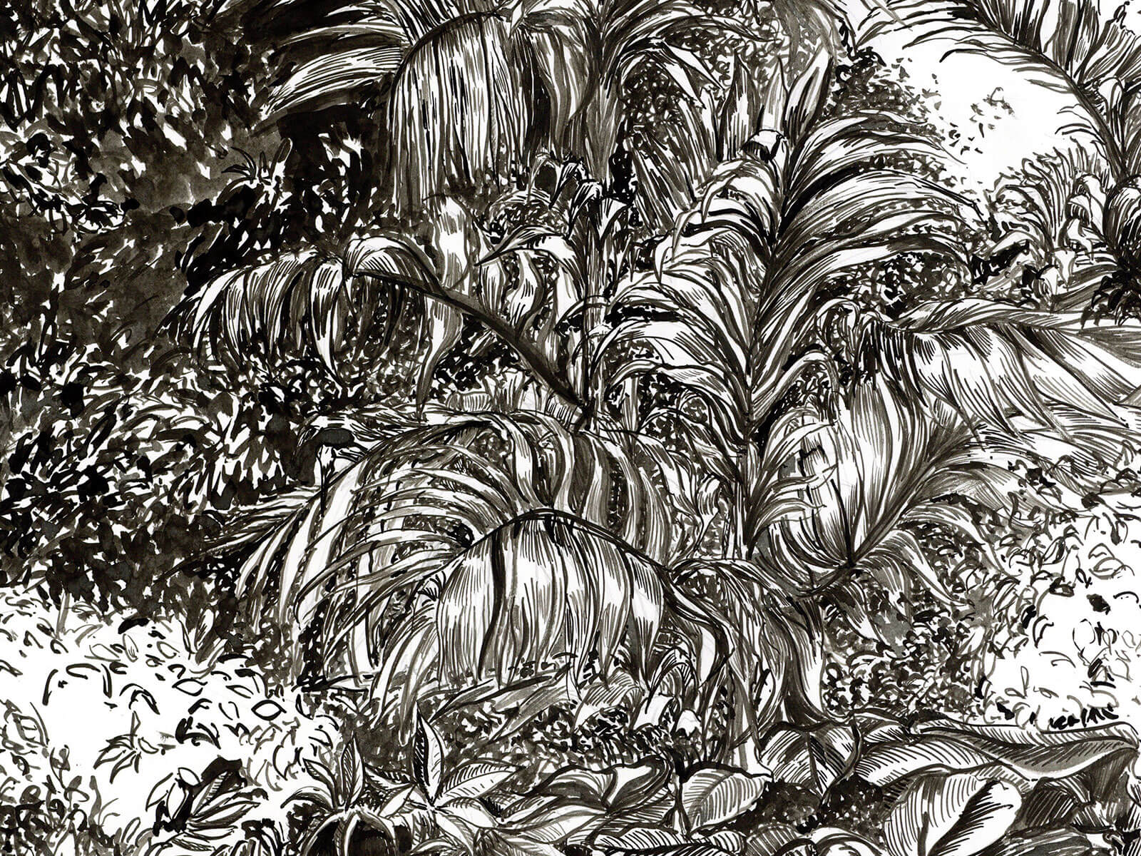 Black-and-white sketch of a fern in a jungle.