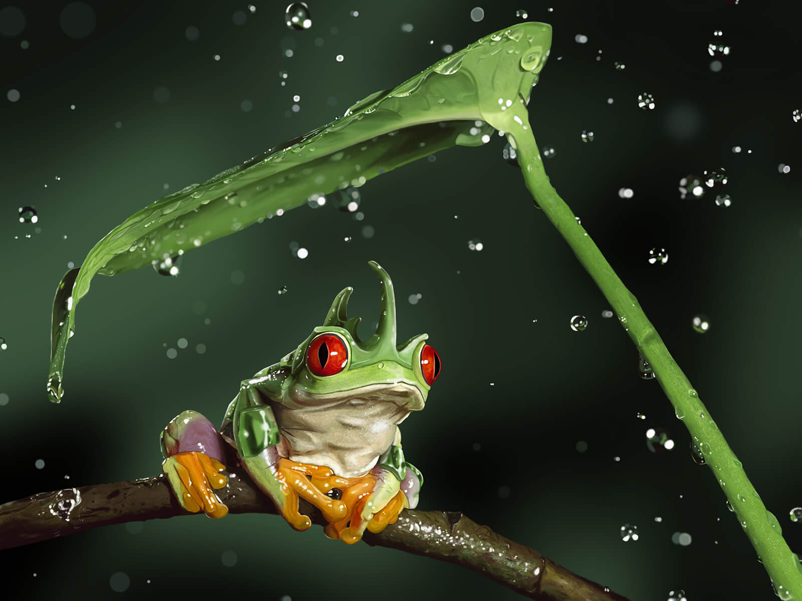 A red-eyed, green-horned tropical frog sits on a branch as a leaf shields it from relatively massive falling raindrops.